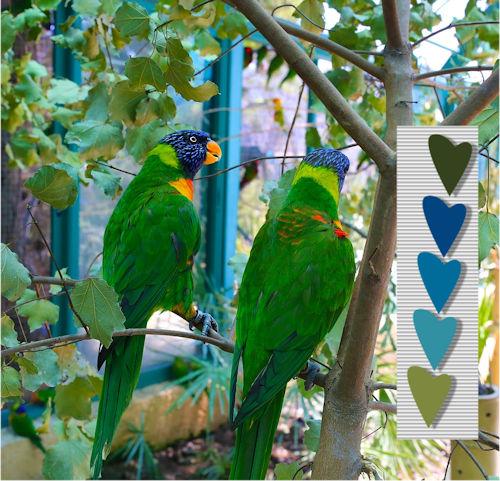 parrots-palette colors.jpg