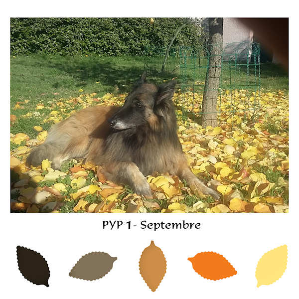 PYP1.jpg