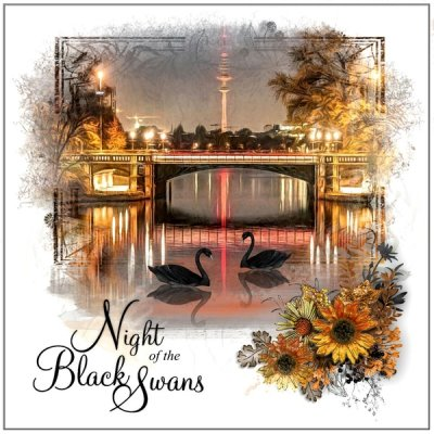 Night of the Black Swans