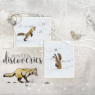 Winter Discoveries