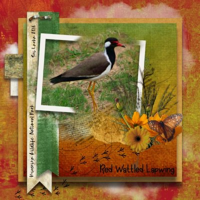 Pick Your Pallet Challenge March - Red Wattled Lapwing