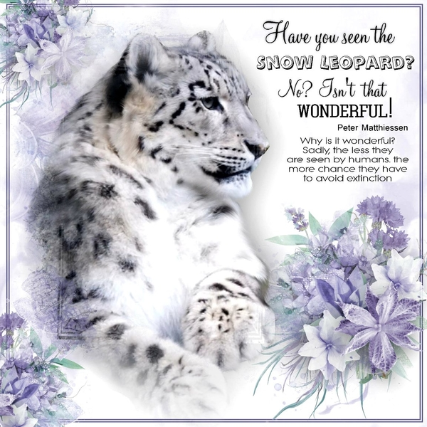 Have you seen the snow leopard?