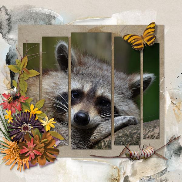 January Scraplift Challenge - Raccoon