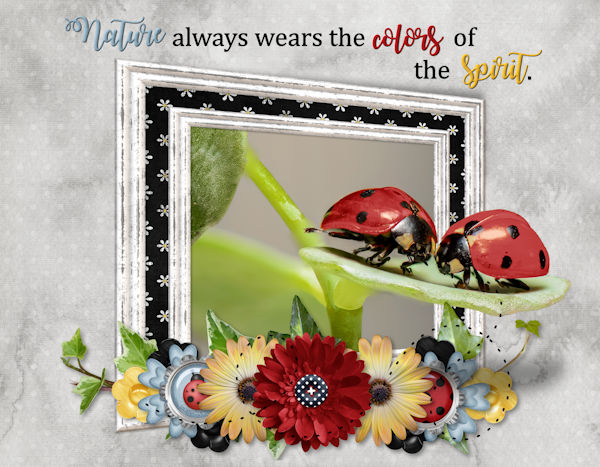 P52 Week 14 Nature - Lady Bugs